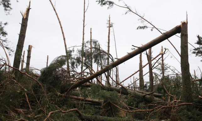 Kukiz'15 i PO apelują do premier Szydło o ogłoszenie stanu klęski żywiołowej
