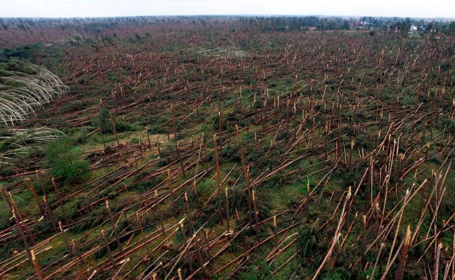 Zniszczony las w miejscowości Rytel