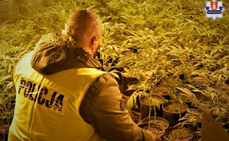 Nielegalna plantacja