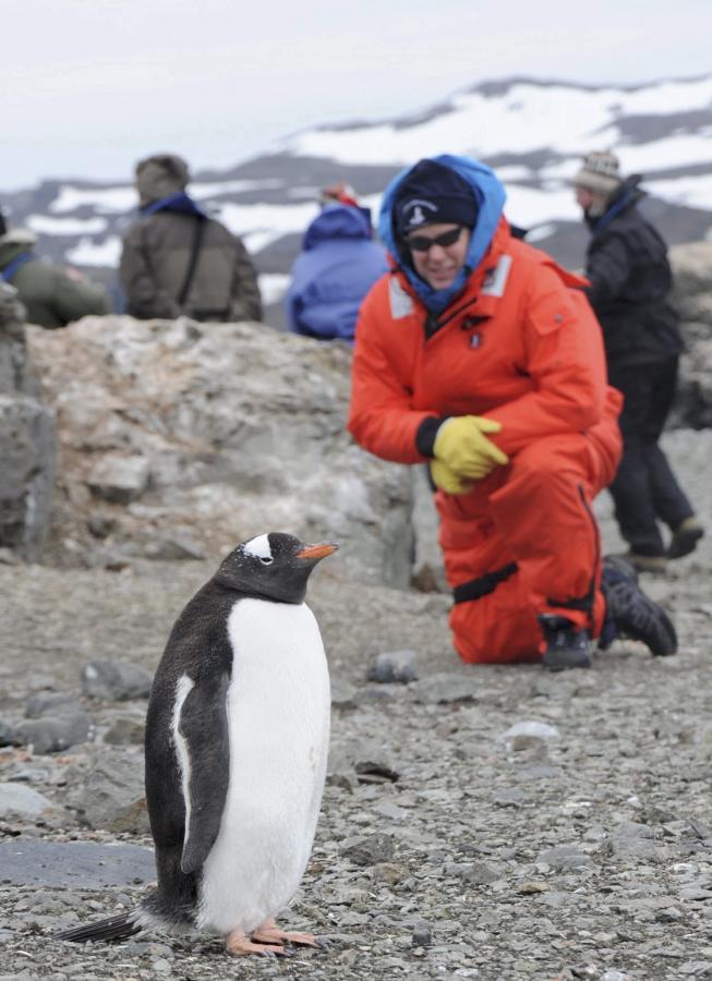 Książe Monako Albert II obserwuje pingwiny na wyspie Ardley