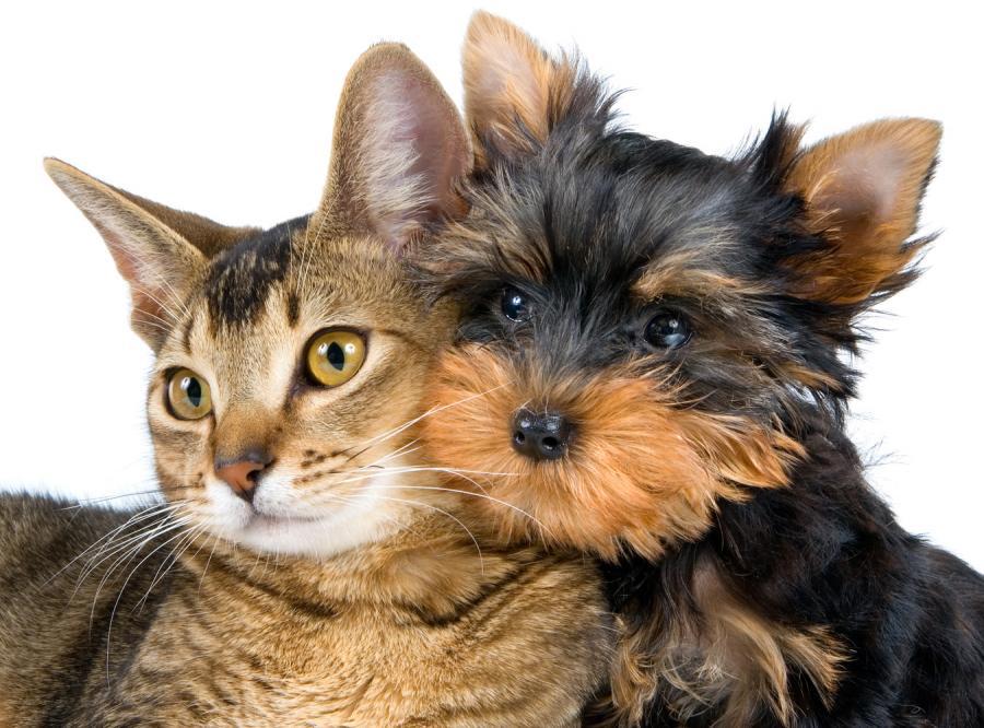 Psy i koty ofiarami domowej przemocy