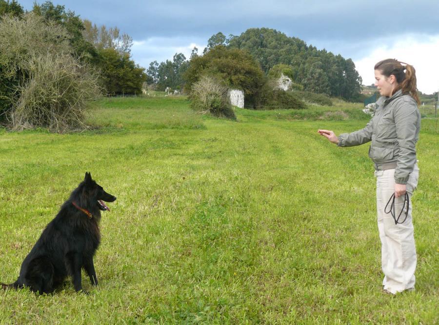 Agresywna tresura psów nie daje efektów