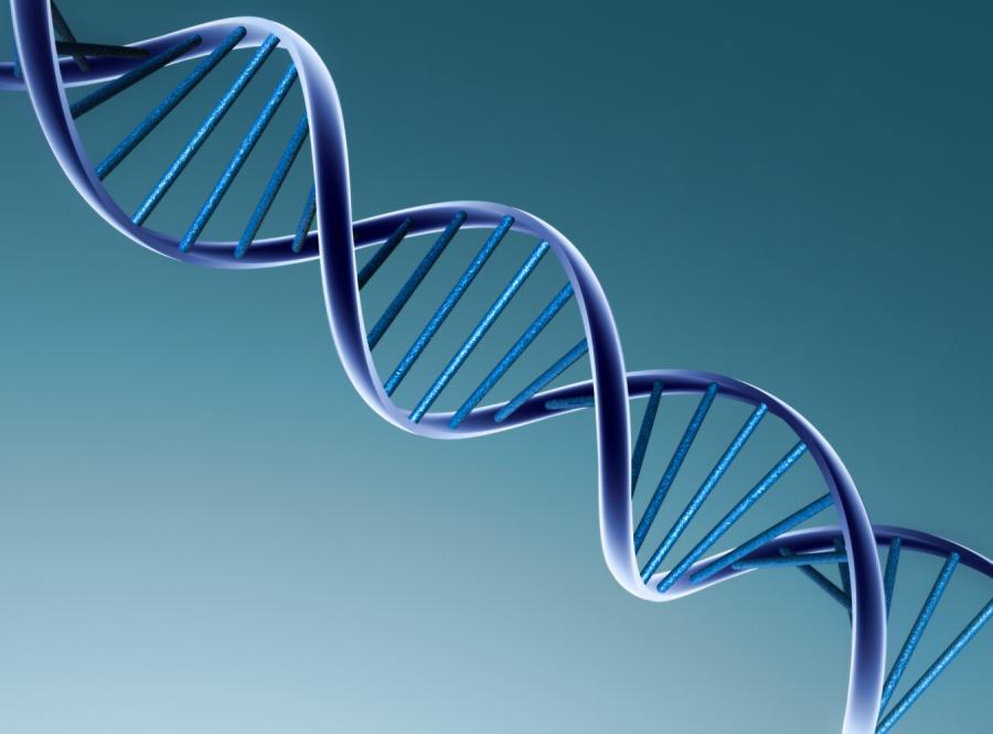Odkryto nowy wariant genu otyłości
