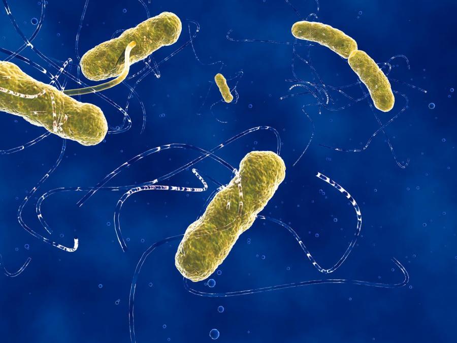Skąd pochodzi zabójcza bakteria?