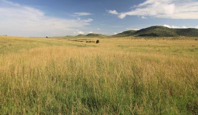 Łąka, zdjęcie ilustracyjne