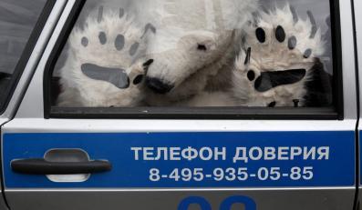 Zatrzymany niedźwiedź