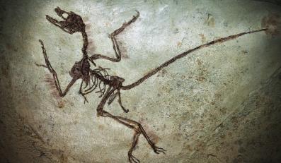 Skamieniałe szczątki dinozaura