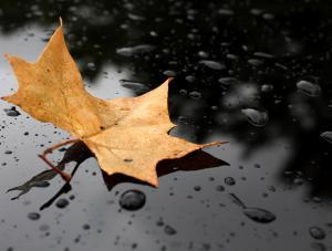 Jesień w sierpniu. Ponura PROGNOZA POGODY