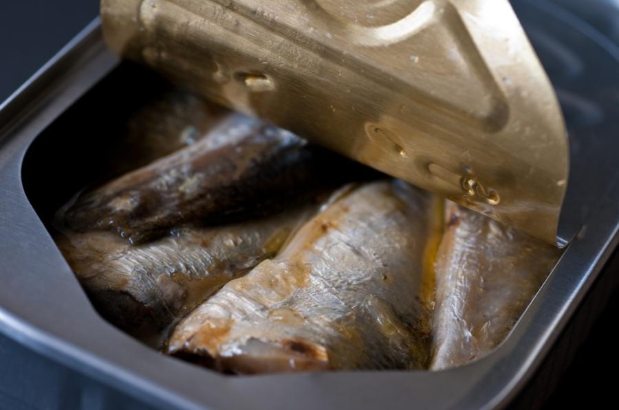 Ryby w puszcze