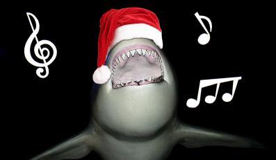Które świąteczne piosenki lubią rekiny?