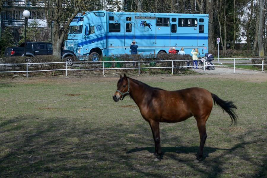 Przygotowania do wywózki koni