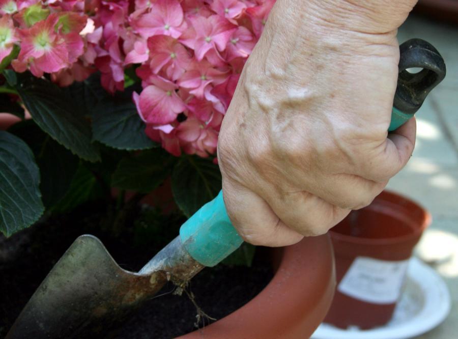 Pory i ziemniaki w przydomowym ogródku