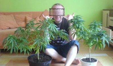 Kradzioną kamerą robił zdjęcia marihuany